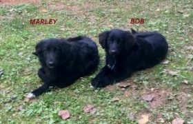 Bob & Marley